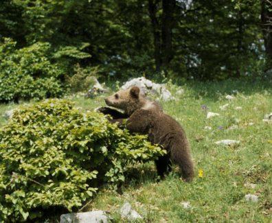 orso abruzzo