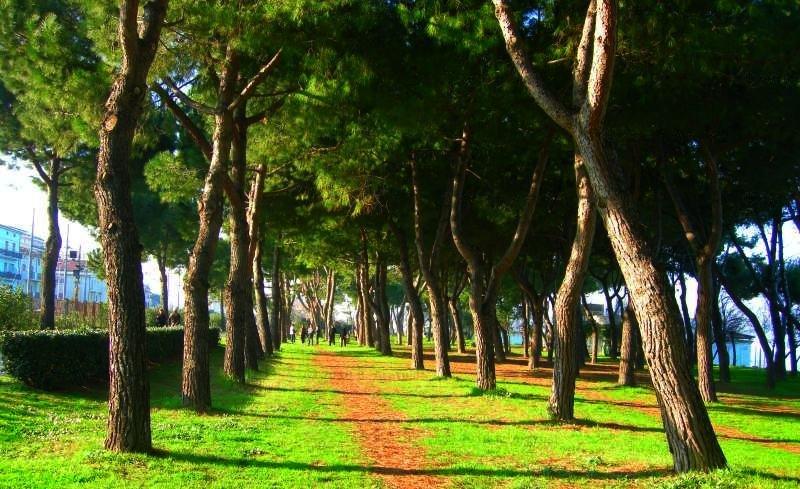 Pineto aderisce al progetto Sport nei Parchi, candidati il Parco della Pace e la Pineta