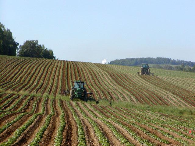 """Investimenti sviluppo rurale, Febbo """"Presentata diffida per gravi inadempienze"""""""