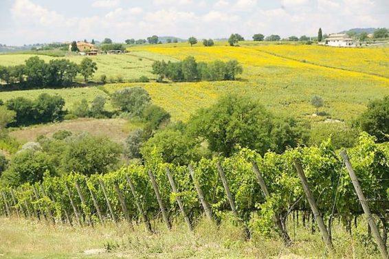 Vino:Sagrantino di Antonelli miglior vino biologico al mondo