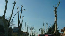 Francavilla al Mare, alberi massacrati: ecco la denuncia