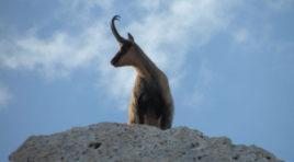 Approvato il nuovo Piano del Parco Nazionale della Majella