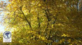 Villa Rosa, Fermate l'abbattimento degli alberi:la denuncia di Co.n.al.pa