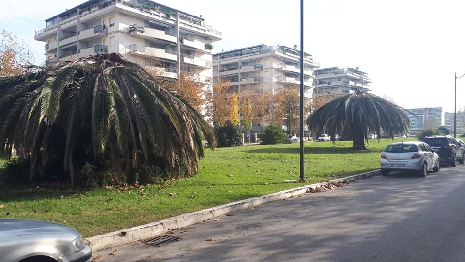 """Degrado al quartiere Saline-Marina PP1: Co.n.al.pa.: """"Riprogettare un verde di qualità"""""""