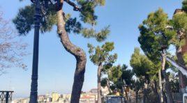"""Danni ai pini d'Aleppo: Co.n.al.pa. """"Interventi che rovinano gli alberi"""""""