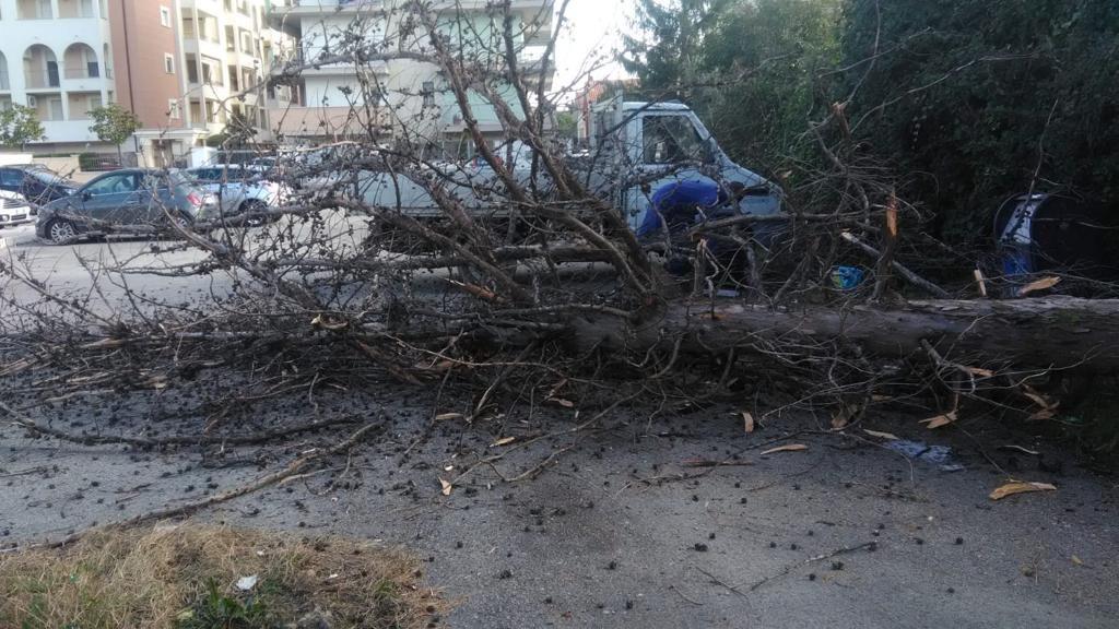 Cade cipresso in via Mantova, intervento dell'ufficio tecnico comunale