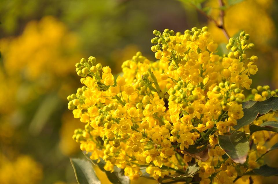 Fidapa Pescara Portanuova, un rametto di mimosa alle neo mamme e figli
