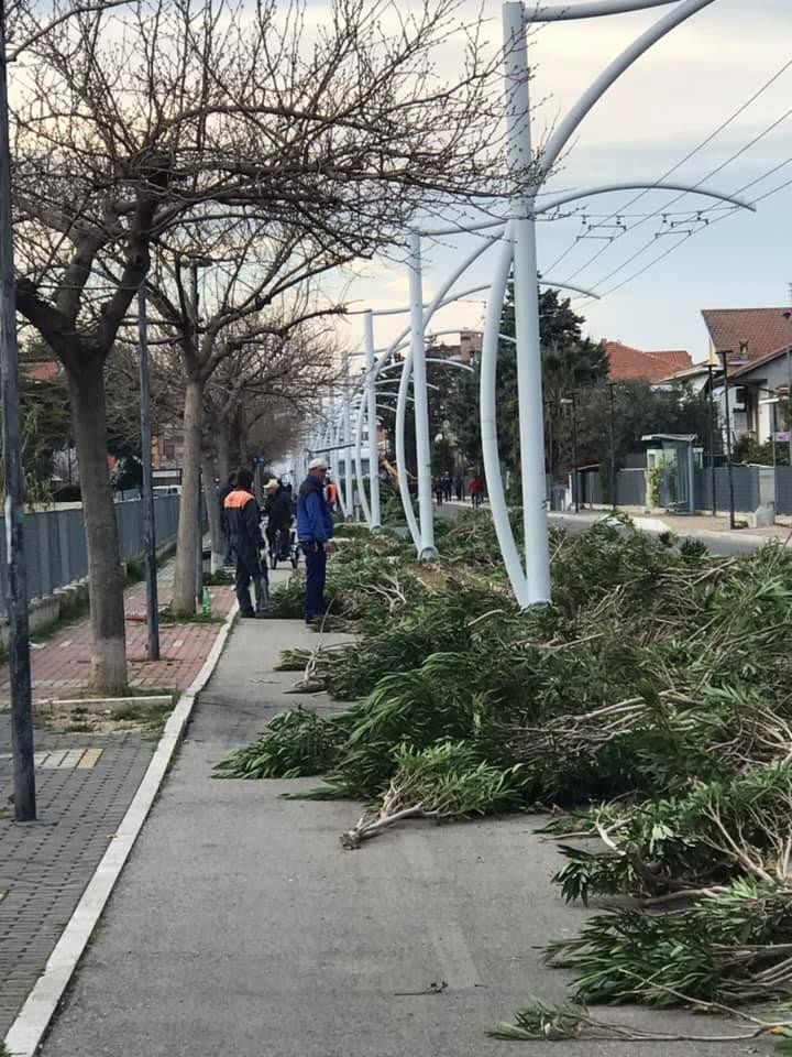 Massacro di oleandri Strada Parco: la denuncia dell'associazione per la tutela alberi e paesaggio