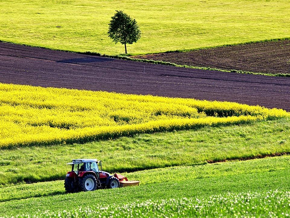 Pulizia terreni privati: sanzioni per chi non rispetta l'ordinanza