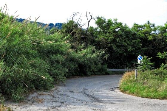 """""""La condizione delle strade provinciali SP1 della Bonifica del Tronto e la SP2 Martinsicuro–Villa Lempa sono realmente vergognose"""""""