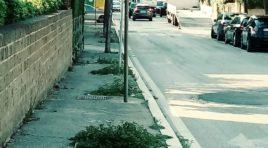 Viale Monte Sirente, aiuole abbandonate e nel degrado: la denuncia