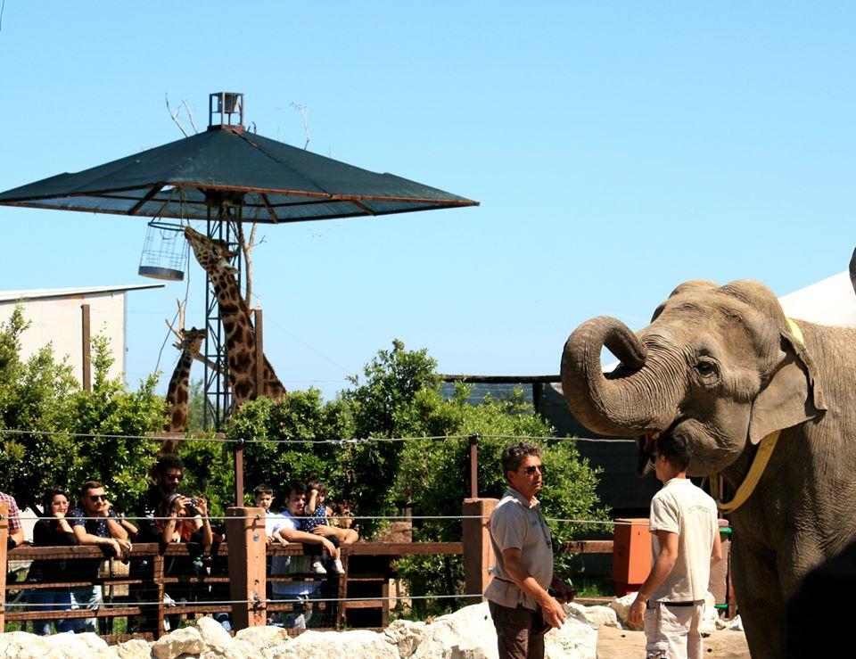 Zoo d'Abruzzo: ingresso gratuito per operatori sanitari e protezione civile