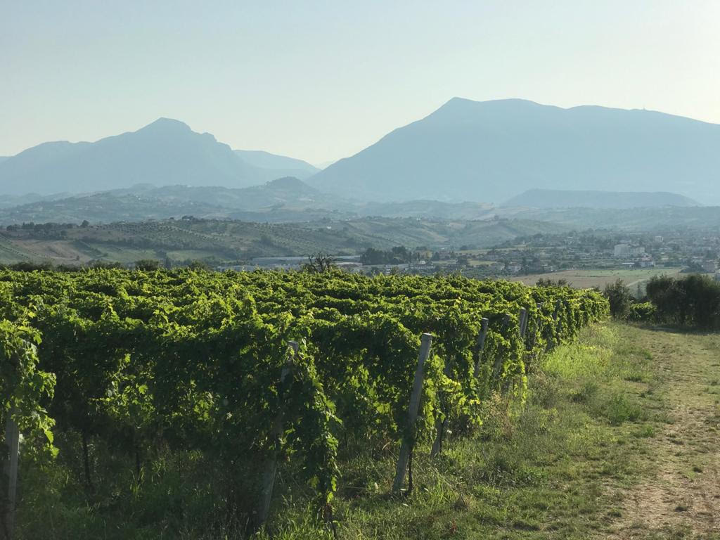 Torano Nuovo, anche il Consorzio Vini Colline Teramane dice no all'antenna