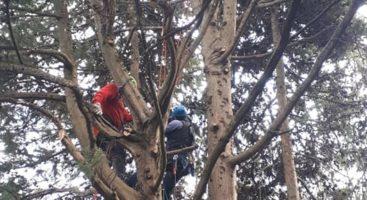 Loreto Aprutino, continua la potatura degli alberi al parco dei Ligustri