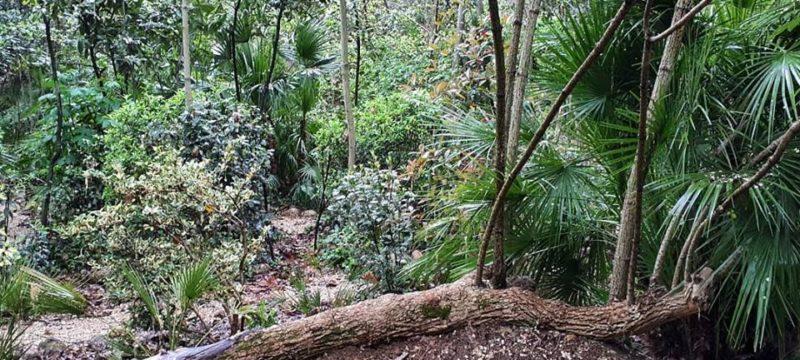 Loreto Aprutino, il 1 maggio lezioni di botanica al parco dei Ligustri
