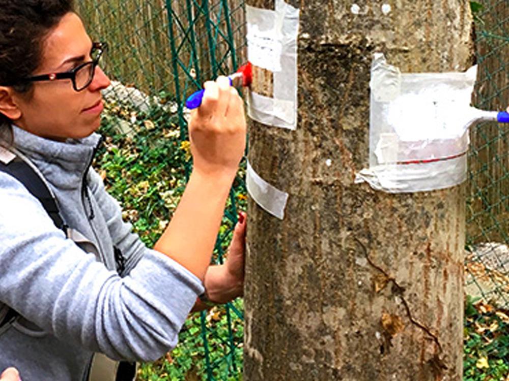Parco Nazionale della Majella, il progetto Volontariato diventa realtà