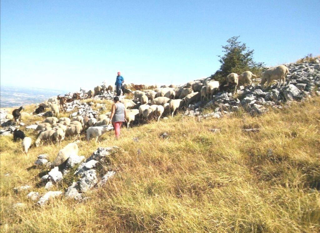 Parco Nazionale della Majella, indennizzi agli allevatori in 24 ore