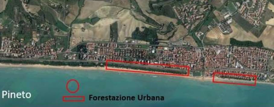 Pineto ottiene oltre 110mila euro per interventi su 45mila mq di pineta